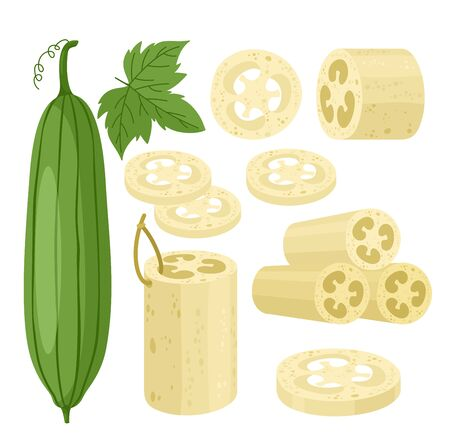 Cartoon flat loofa collection with organic bath accessory for scrub body skincare, natural agricultural green luffa fruit and leaves icons isolated on white, loofah sponge vector illustration set
