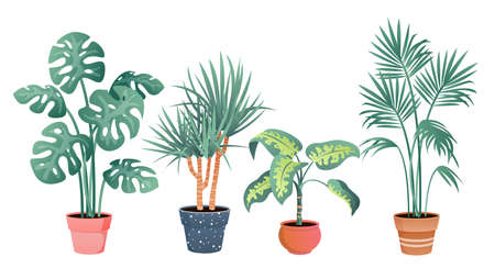 Tropical house plants decor vector illustration set. Cartoon flat potted plants from tropics botanical collection in clay pot for home garden decoration isolated on white