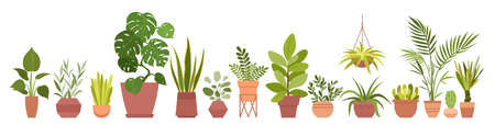 House plants home decor vector illustration set. Cartoon potted green plants flowers collection, houseplants in clay pot, hanging decorative flowerpots isolated on white background.