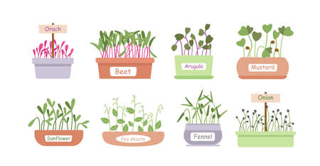 Micro greens sprouts boxes cartoon set, salad food menu