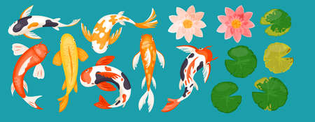 Koi carp asian fishes vector illustration. Cartoon top view of colorful goldfishes, pink lotus lily flowers and green leaves, japanese oriental garden flat collection isolated on blue background 向量圖像