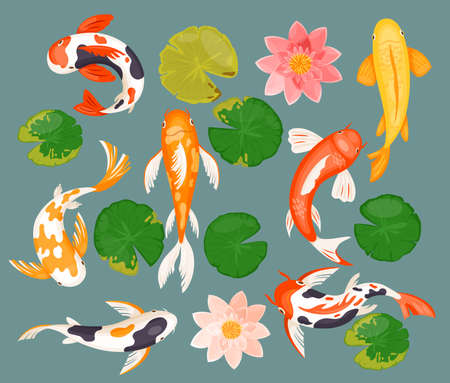 Koi carp fishes, asian prosperity fortune lucky symbol vector illustration. Cartoon swimming underwater aquatic fish, pink lotus flower, green round leaf, flat collection isolated on blue background