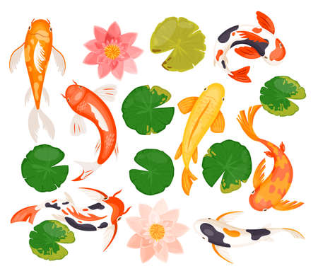 Koi carp fishes vector illustration set. Cartoon swimming colorful goldfish, pink blossom of lotus lily flower, tropical green leaf, animals and nature plants of natural asian pond isolated on white 向量圖像