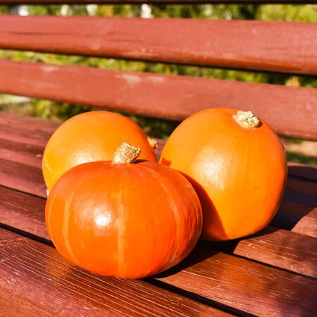 Orange pumpkins on a bench on a background of green grass in the sun. Harvest concept. Side view. Halloween