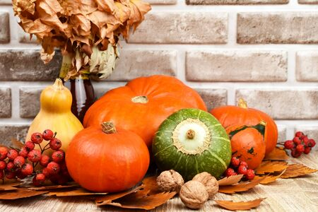 Autumn still life. Collected pumpkins with nuts, mountain ash and autumn leaves on a wooden table on a background of a white brick wall. Harvest Autumn Concept.