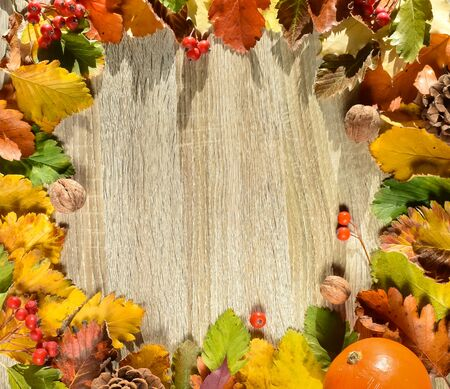 Charming wreath of colorful autumn leaves, pumpkins, rowan berries on a wooden background close-up. Place for an inscription.