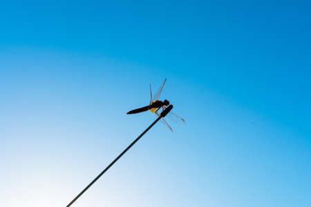 Dragonfly on an antenna against the blue sky. Dragonfly silhouette against the blue sky 스톡 콘텐츠