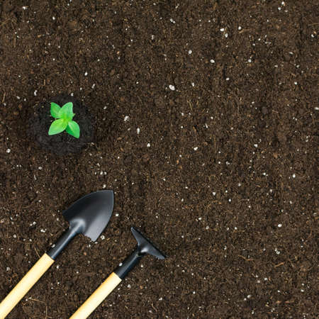 Garden tools shovels, rakes, with a green plant on a black earth background. View from above. Place for an inscription.