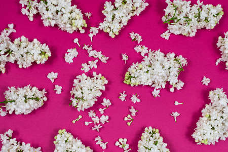 White lilac flowers on a dark pink background. The basis for the postcard. Top view, flat lay, copy space