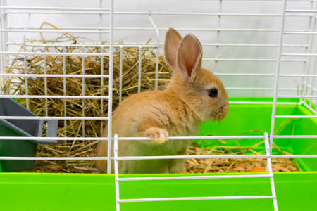 Red-eared rabbit on in a cage. A beautiful pet. Fluffy animal, fur. Home, joy. The rabbit is standing with its ears raised. Close-up.
