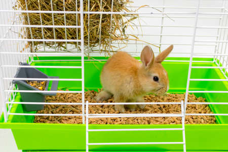 A cute little ginger rabbit sits in a cage. A beautiful pet. Fluffy animal, fur. Home, joy. Archivio Fotografico