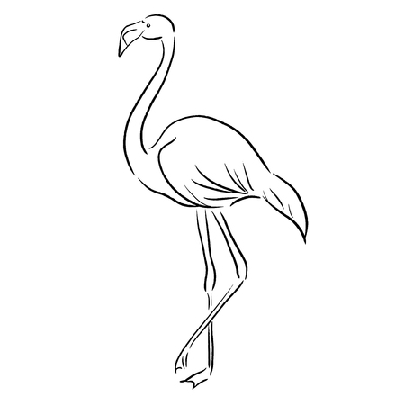 flamingo sketch one line draw vector illustration
