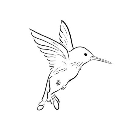 voler, colibri, croquis, une, ligne, dessiner, vecteur, illustration Vecteurs