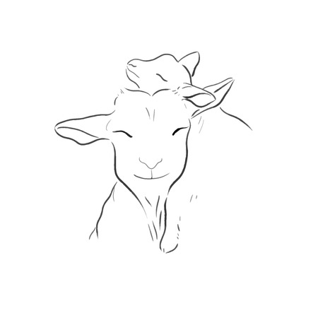 elegant goats one line draw vector illustration
