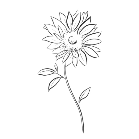 sun flower vector illustration