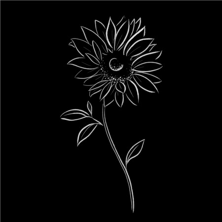 sun flower vector illustration Illustration