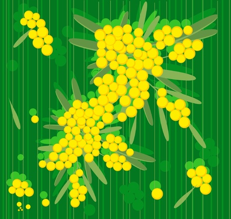spring flowers mimosa Stock Vector - 11074682