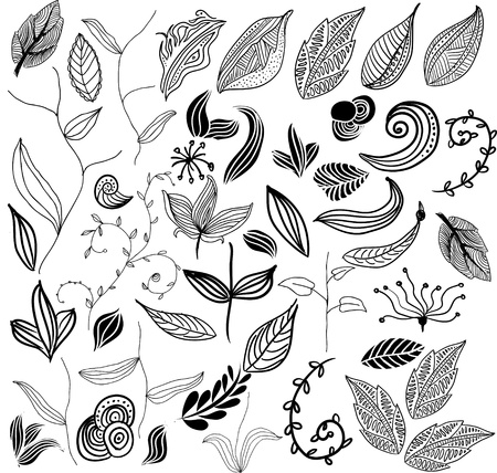 willow: set of leaf vector