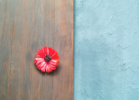 Greeting card of gerbera flower on wooden background for Valentines Day, Womens Day and Mothers Day holidays. Top view. Copy space, closeup.