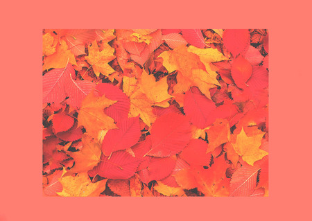 Creative collage. Organic background of autumn leaves. Natural light. Trendy color concept of the year 2019.Closeup, copy space.