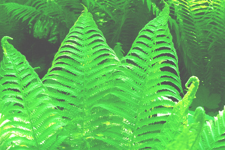 Colored leaves of fern with sunlight. Trendy tropical background. Close-up. Copy space Reklamní fotografie