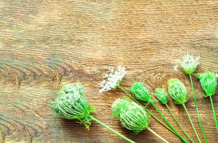 White flowers on wooden background. Wildlife concept. Natural surface texture for design.Close-up, copy space Banco de Imagens