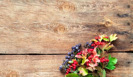 Autumn decor. Viburnum and blackberry berries on wooden background. Close-up, copy space 스톡 콘텐츠