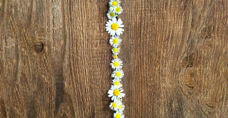 Autumn decor. Daisy flowers on wooden background. Natural surface texture for design. Close-up, copy space