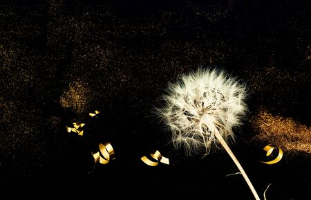 White Dandelion on Black background with golden sparkles. Blurred  effect. Concept for festive background or for project.Close-up Stockfoto