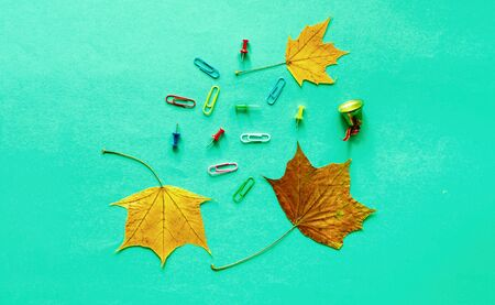 Office supplies on mint background with autumn leaves. Trendy colour of the year 2020. Close-up, copy space