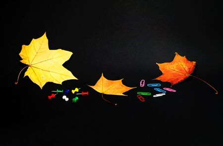 Office supplies on black background with autumn leaves. Close-up, copy space