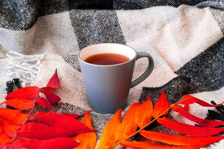 Cup with tea and colored leaves on checkered plaid. Rest, relaxation. Hygge style. Close-up, copy space Reklamní fotografie