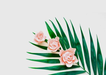 Tropical background. Palm tree leaves with pink rosebuds on white isolated background. Festive concept. Close-up
