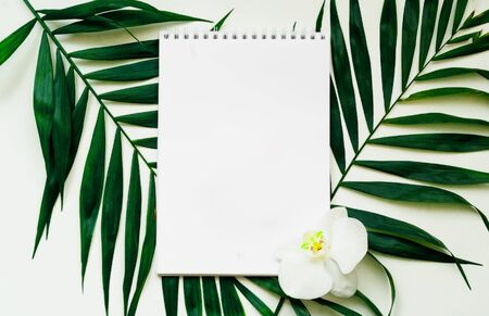 Tropical background. Notebook on a white background with palm leaves. Close-up, copy space Stock Photo