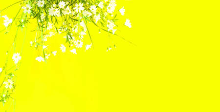 White wildflowers on yellow background with sun rays. Summer Equinox Day or Solstice. Creative copy space for positive mood. Foto de archivo