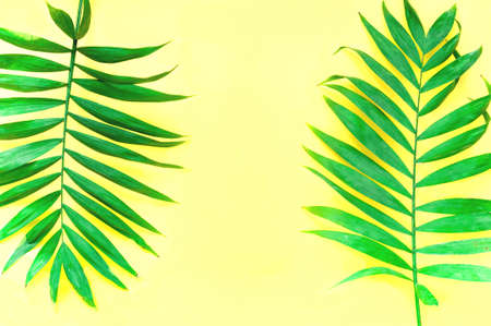 Yellow background with palm leaves. Trendy color 2021. Close-up, creative copy space Фото со стока