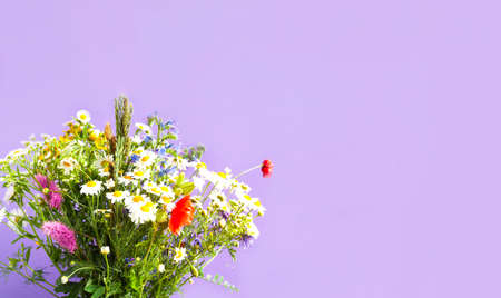 Bouquet of wildflowers on a purple background. Wildlife concept or hello summer. Close-up