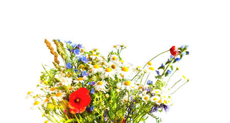 Charming Bouquet of wildflowers on white background. Wildlife concept or hello summer. Close-up