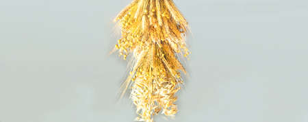 Didukh or sheaf of rye and dry cereals on a gray background. The concept of the oldest cults of Ukrainian Christmas rites. Close-up