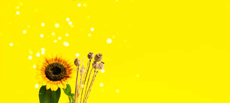 Bright Sunflower and dry poppy on yellow background. Harvest festival. Creative Summer Composition. Close-up Фото со стока