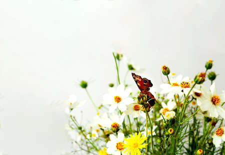 Summer bouquet of wildflowers on a white background. Hello summer concept. Creative copy space Фото со стока