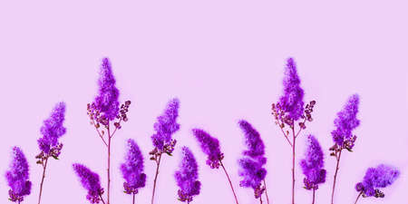 Charming purple dry flowers on pink background. Flower power or Creative space for design. .