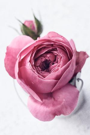 Rose rose délicate dans un seau décoratif blanc, tonification vintage. Banque d'images