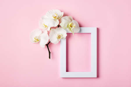 White frame and white orchid flower on a pink background.