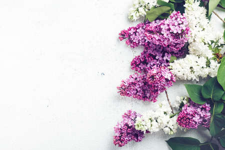 Purple and white lilac flowers on a white background.