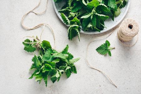 Melissa plant, fresh fragrant leaves of lemon balm, ready for drying.