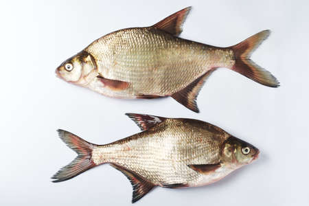 Two freshwater silver bream fish on a white surface. Фото со стока