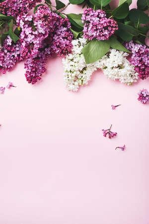 Purple and white lilacs on a pink background. Фото со стока