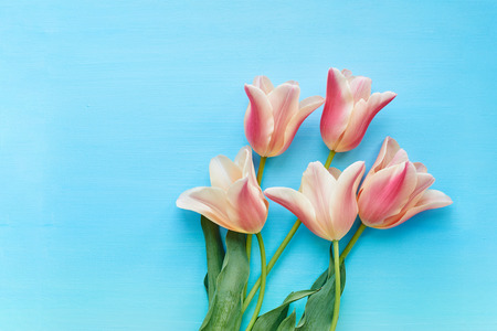 Tulips on blue background top view Stock Photo