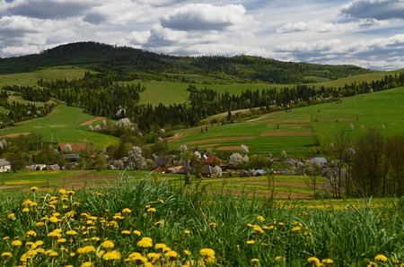 The picturesque mountainous Ukrainian village is surrounded by spring yellow flowers Stock fotó